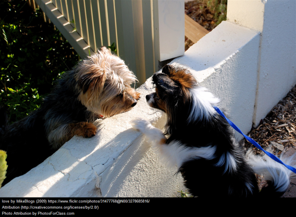 Love dogs.png